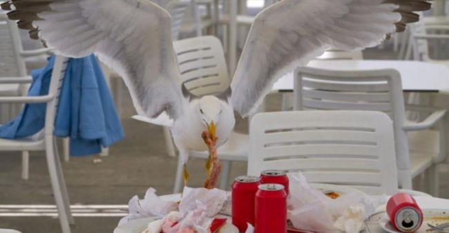 Detenido por morder a una gaviota que intentó robarle su pedido del McDonalds