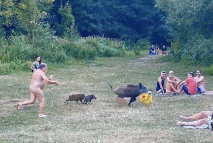 Un hombre desnudo persigue a un jabalí que le roba su portátil
