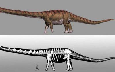 Buscan en Argentina los restos del mayor titanosaurio que habitó la Tierra